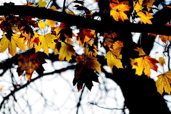 Look automne-hiver 2014-2015